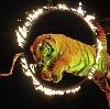 Цирки в Тарасовском