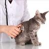 Ветеринарные клиники в Тарасовском